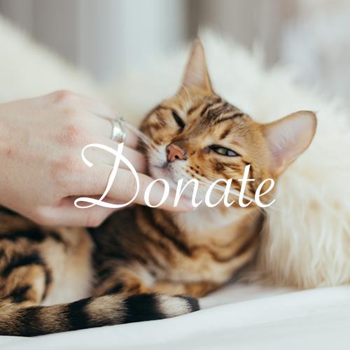 Kittyhawk Donation